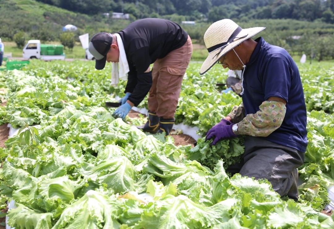 安心の産直野菜を安定供給